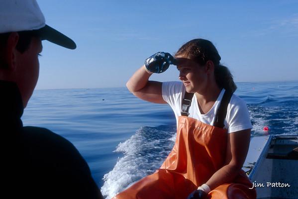 Maine Coast 2003