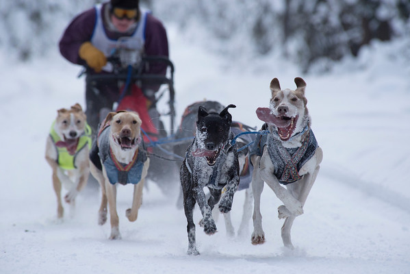 Open North American Championship Dog Sled Race