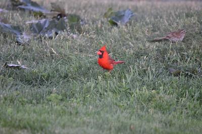 Cardinal 2020