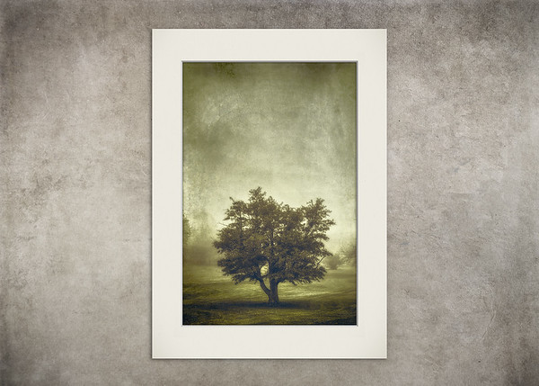 Tree in the Fog 2 - $8