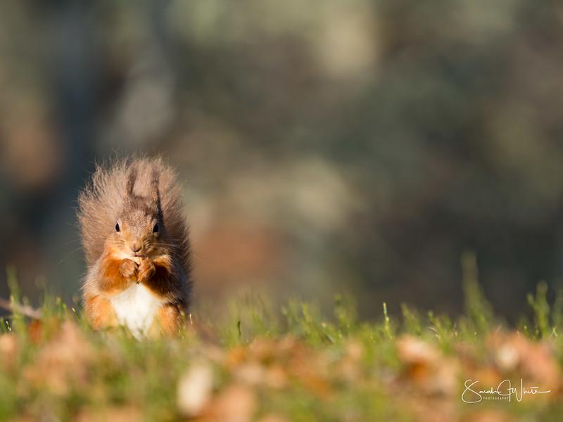 RedSquirrelBootCamp_130217_286.jpg