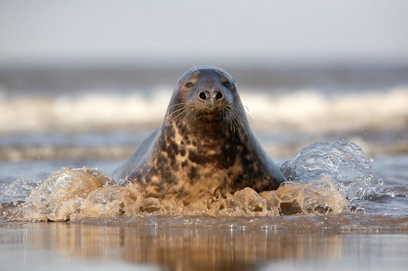 Seal - 7904.jpg