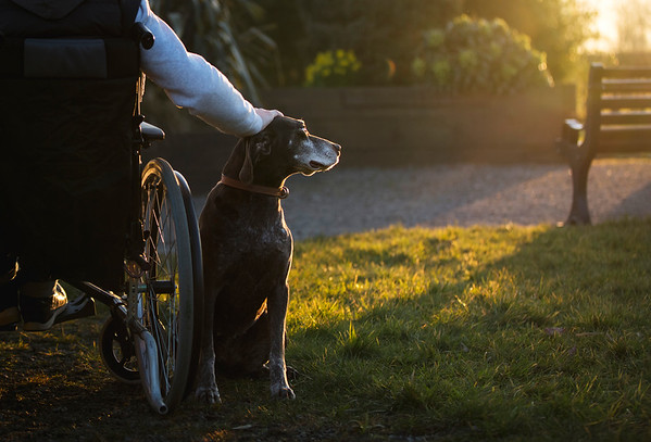 Assistance Dogs and Dog Charities