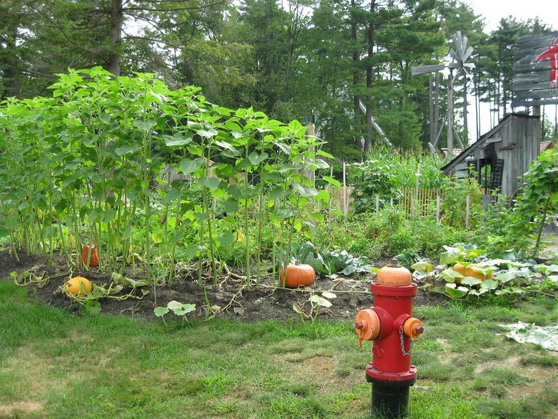 Garden being crown in front of Terror in the Corn.