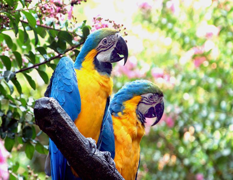 Parrots two.jpg