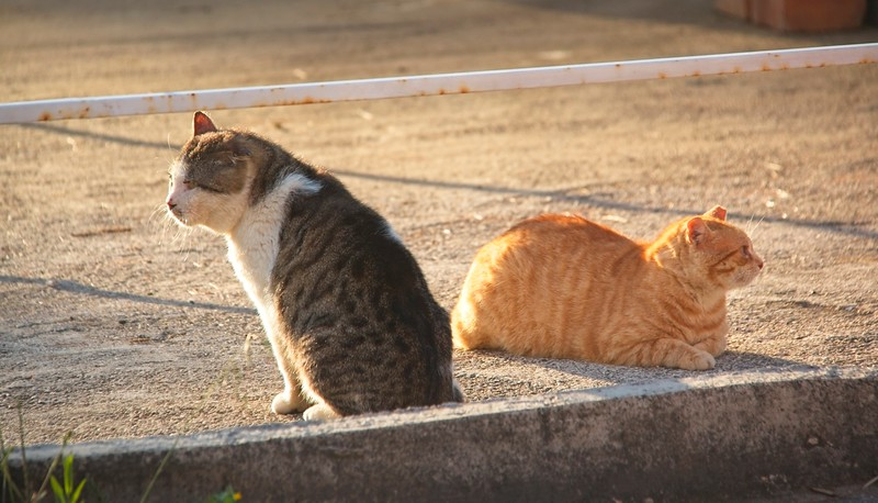Cats of Mljet, Croatia
