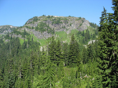 Yellow Aster Butte