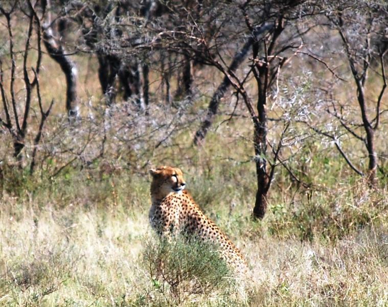 Serengeti (142).JPG