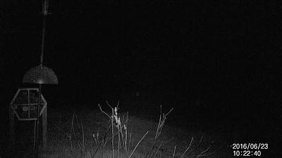 Trail Camera #3