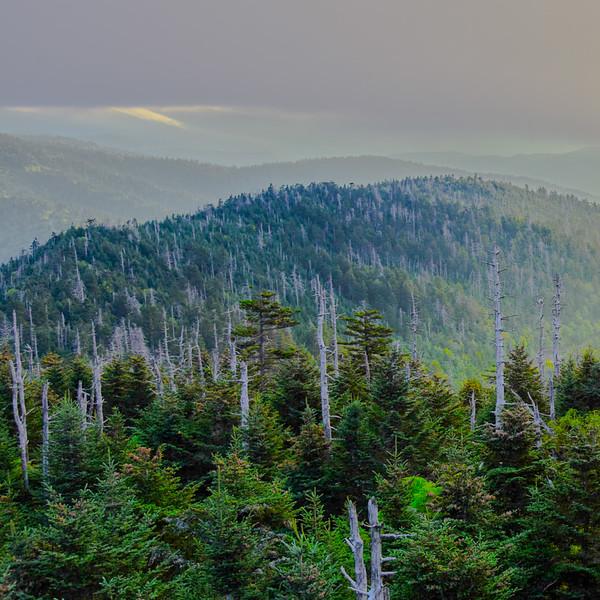 Smoky Mountains 114