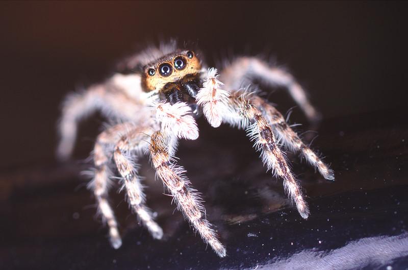 d01_spider1.jpg