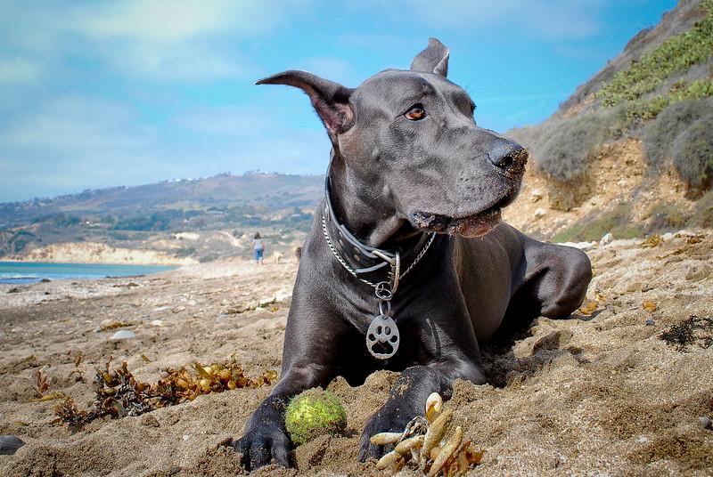 dogs_beach-088.jpg
