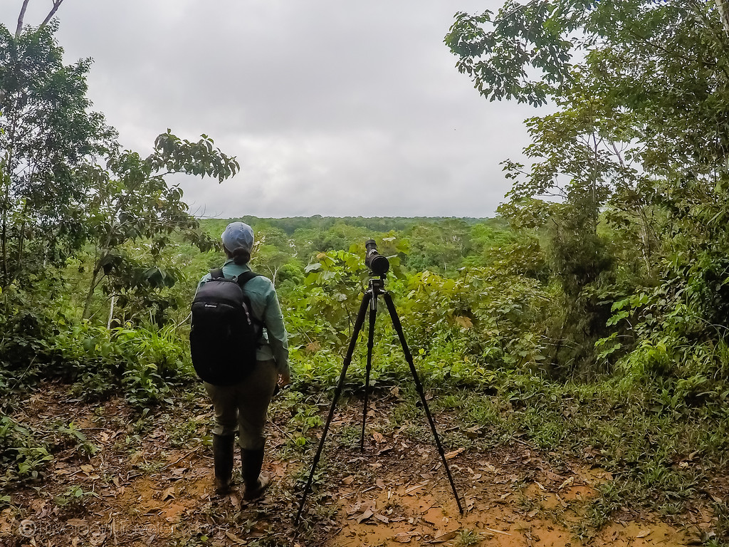 Searching for wildlife in the Amazon