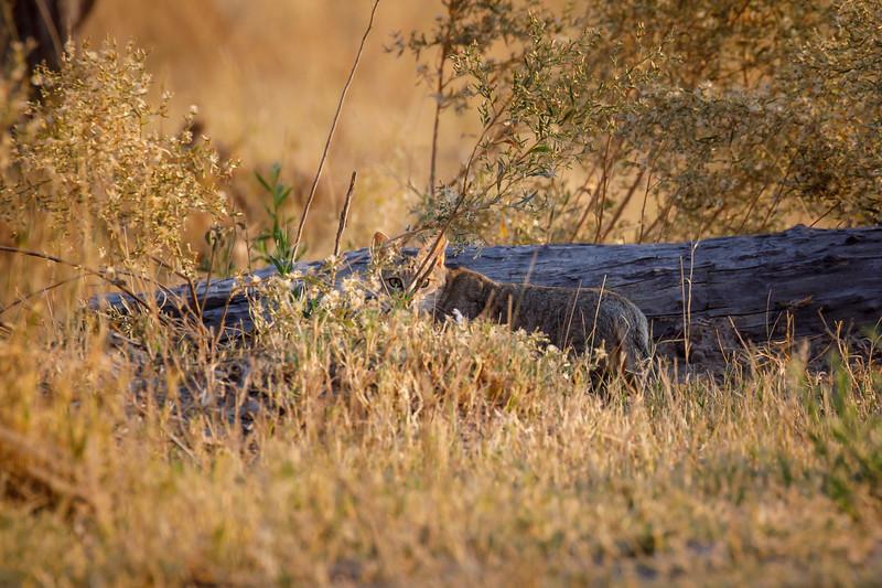 Botswana_0818_PSokol-774.jpg
