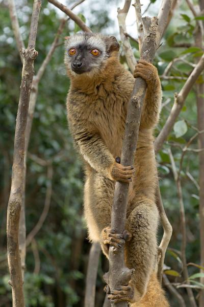 Madagascar_2013_IG3A2337.jpg