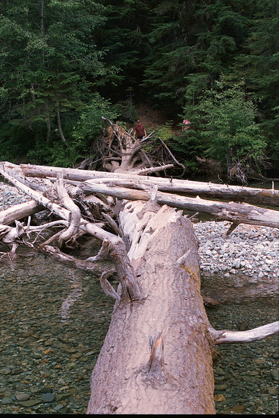 Tree-bridge over South Fork of Sauk River