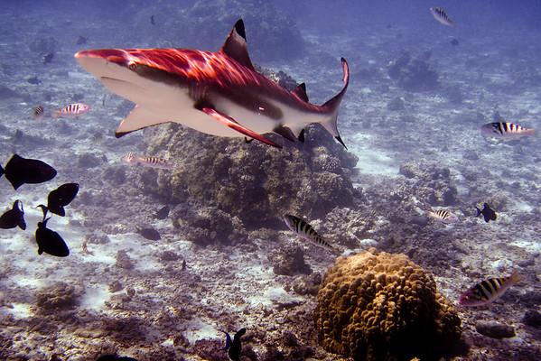 French Polynesia, 2007