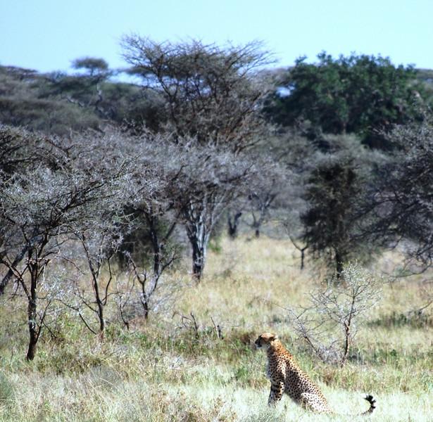 Serengeti (131).JPG