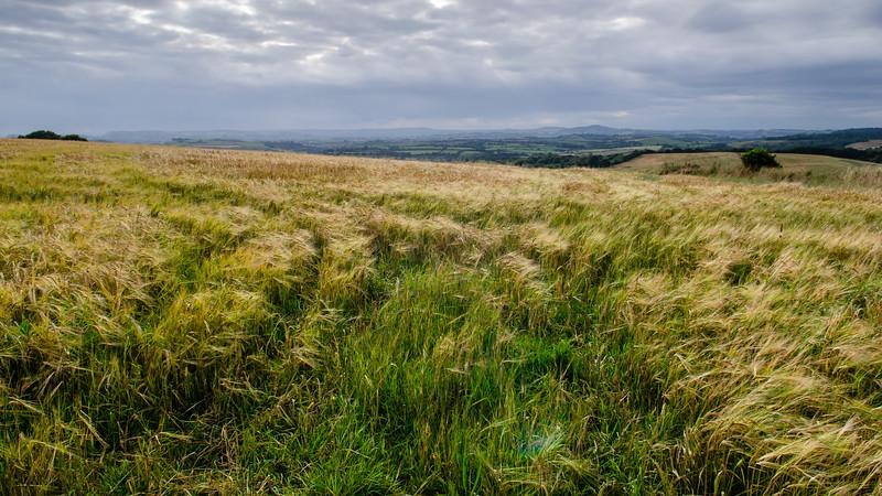 Marshwood Vale landscape