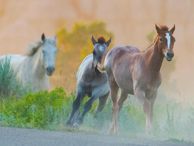 horses_DRM6145.jpg