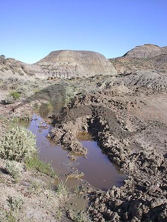 Wyrick Ranch T-Rex Excavation, Fallon County, Mont.: 5/10/04--5/28/04
