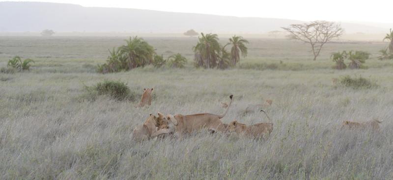 East Africa Safari 361.jpg