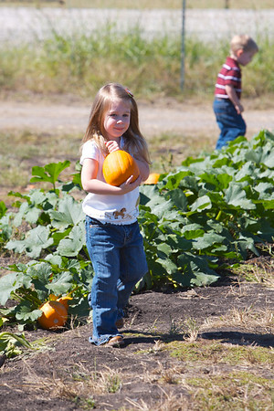 Pumpkin Patch 2007