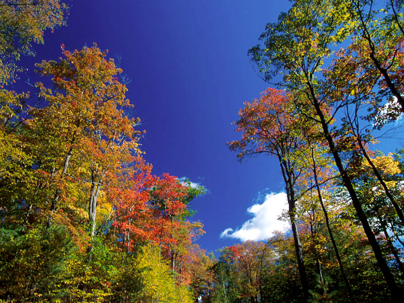 Fall Wallpaper by Jim and Mary.jpg