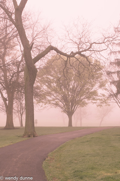 Lilac Park & Commons Fog May 2015
