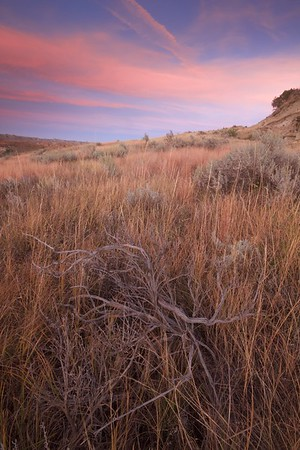 All Teddy Roosevelt National Park