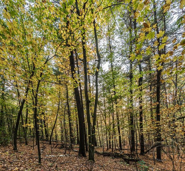 Fall-1580.jpg