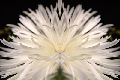 Floral Metamorphoses