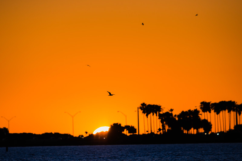 Tampa Bay sunset birds-2.jpg