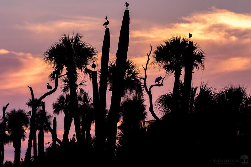 Sunrise silhouette at Orlando Wetlands
