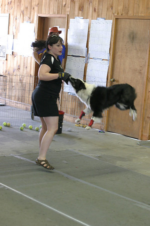 Flyball at the Fair 2010