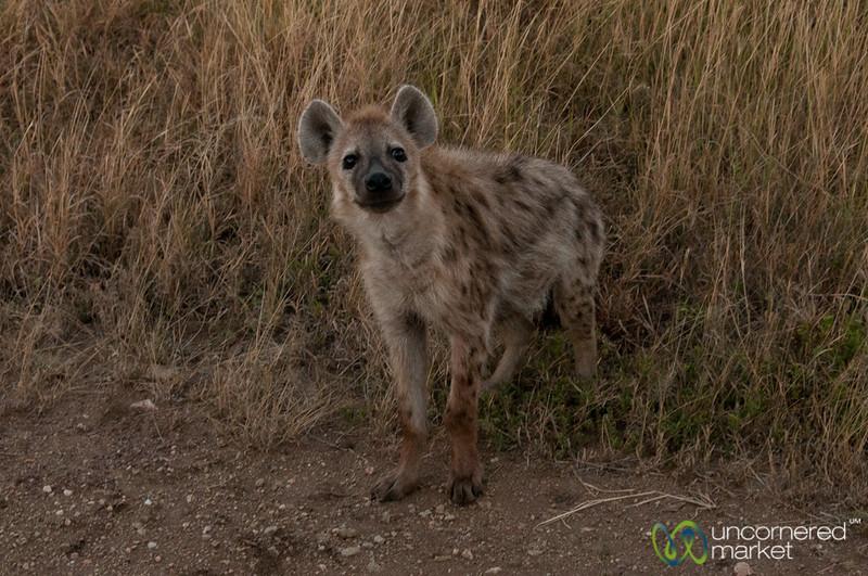 Hyena By the Road - Serengeti, Tanzania