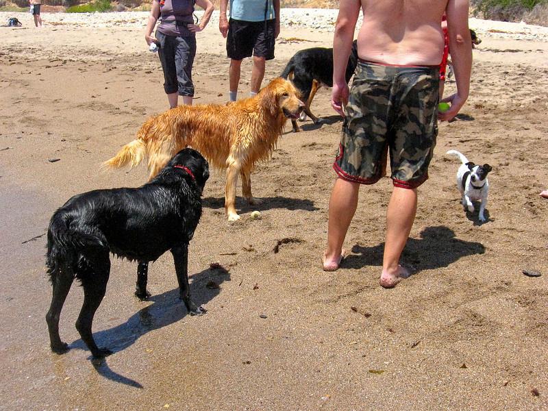 dogs-81.jpg