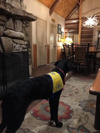 Kuzco in the cabin