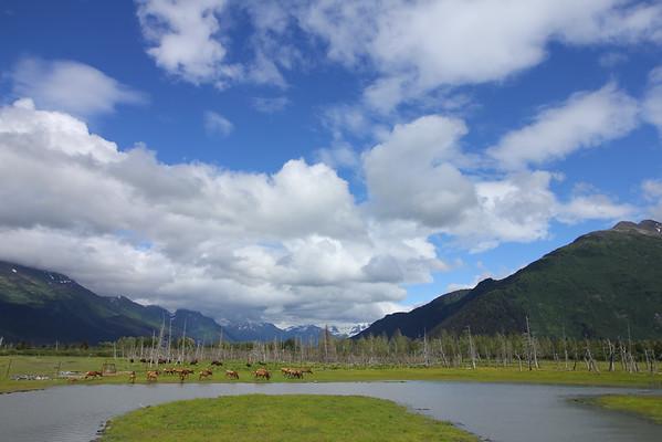 Alaska Trip - Wildlife Preserve - 7/13/14
