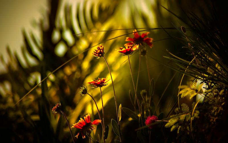 The Magic of Light-283.jpg