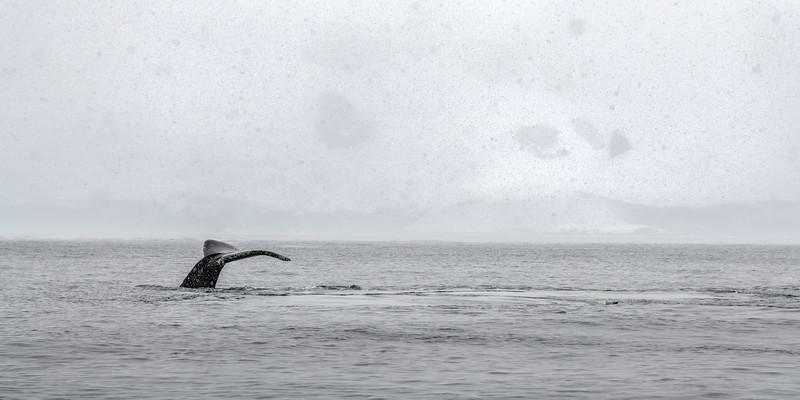 Antarctica-0939.jpg