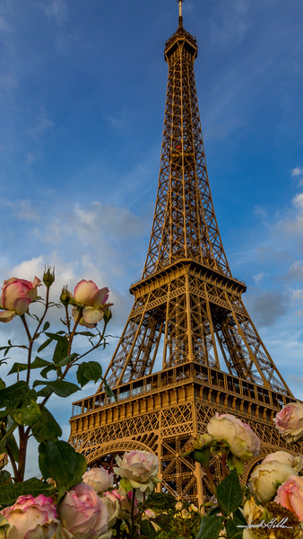 Roses and the Eiffel Tower