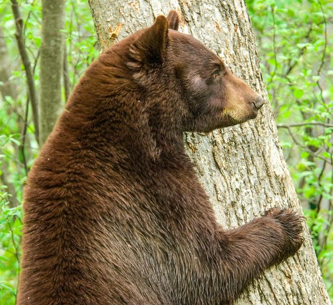 Bears-40.jpg