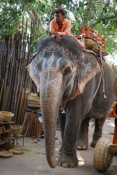 India-Varanasi-2019-0267.jpg