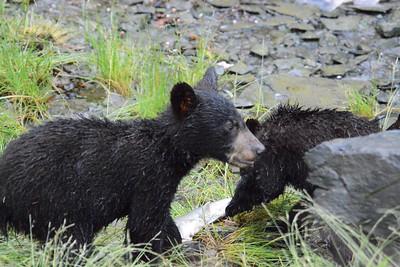 8-11-13 BEARS VALDEZ