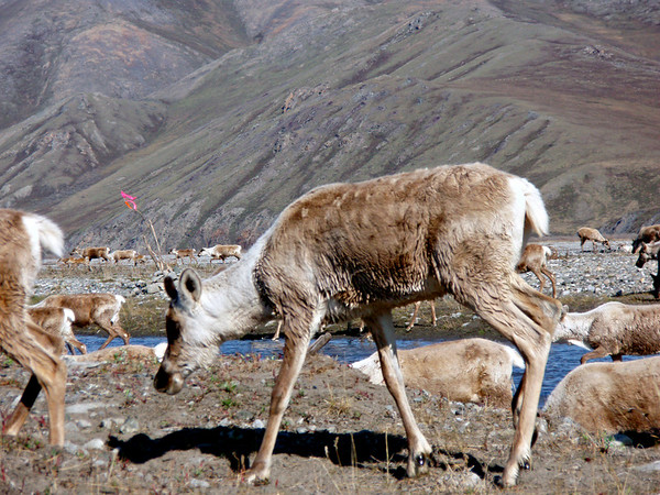 Dads Alaska Junket 2007