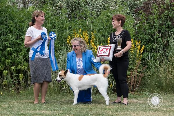 Winners - Israel Canaan Dog Club of America Nationals