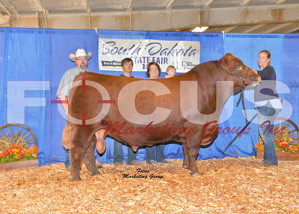 Red Angus Shows