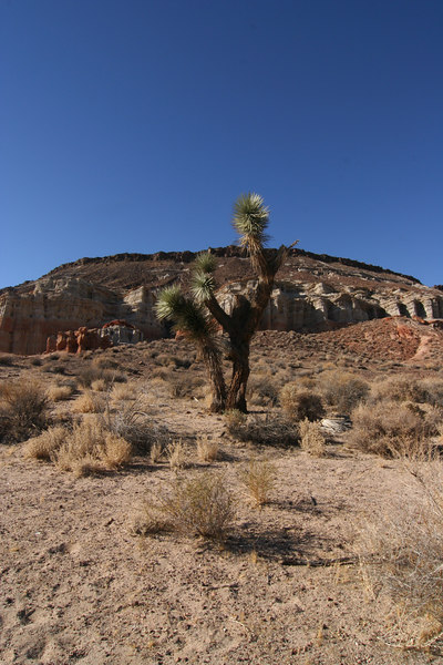 red roc canyon sp 001-2.jpg
