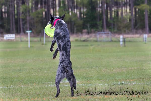 _MG_3188Up_dog_International_2016_StephaniellenPhotography.jpg